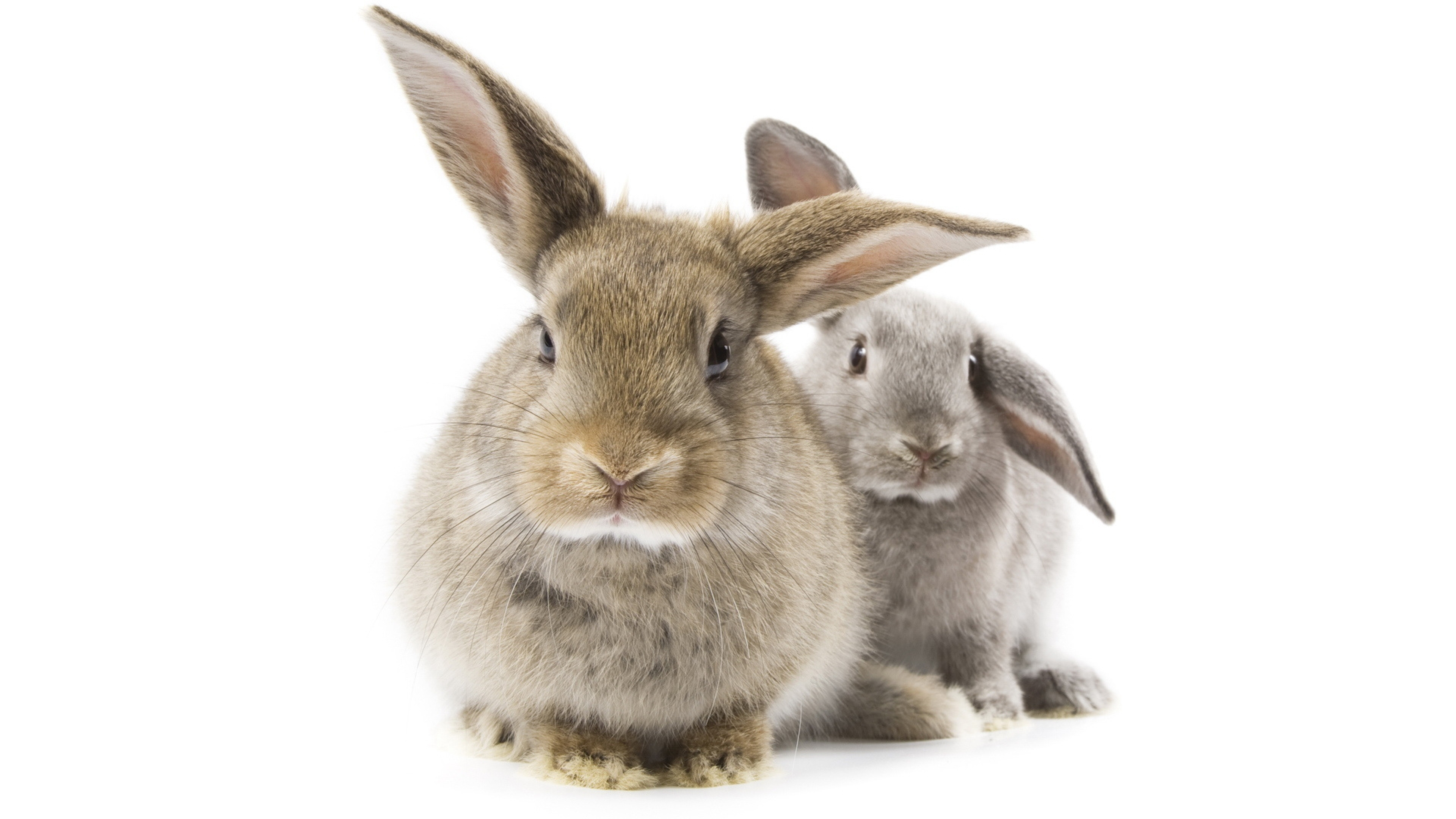 Photo of two rabbits