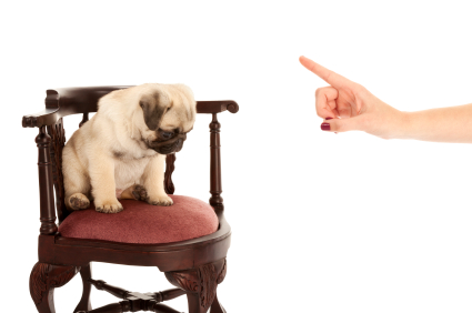 dog sits in a chair looking sad as a person wags a disapproving finger at it